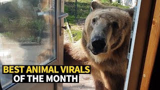 Top Viral Animal Videos - May 2019