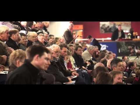 Buying A Horse At Auction - Dispelling The Myths