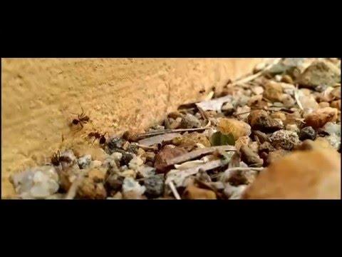 Urumbu   Navarasam - Thaikkudam Bridge - Music Video
