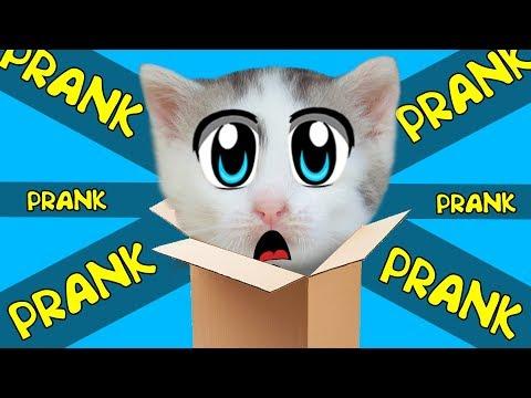 НОВЫЕ ПРИКОЛЫ С КОТАМИ! 5 Пранков и приколов для животных! кот Малыш и кошечка Мурка РАЗЫГРАНЫ