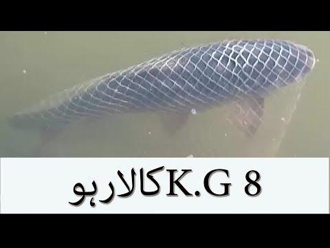 FISHING IN PAKISTAN latest video 2017. 8 KG KALA RAHO. FISHING IN SEA