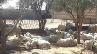 Une sieste bien méritée après une séance de vaccination et traitement aantiparasitaire.