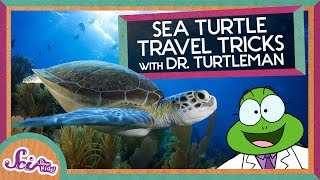 Turtle Travel Tips: How Magnets Can Help Us Navigate | Magnetoreception