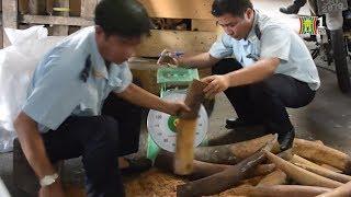 Thủ đoạn tinh vi của đối tượng buôn lậu ngà voi | Tin tức cập nhật