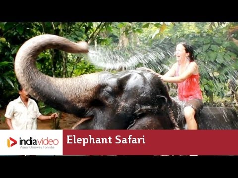 Elephant Camp and Elephant Safari at Periyar National Park in Thekkady
