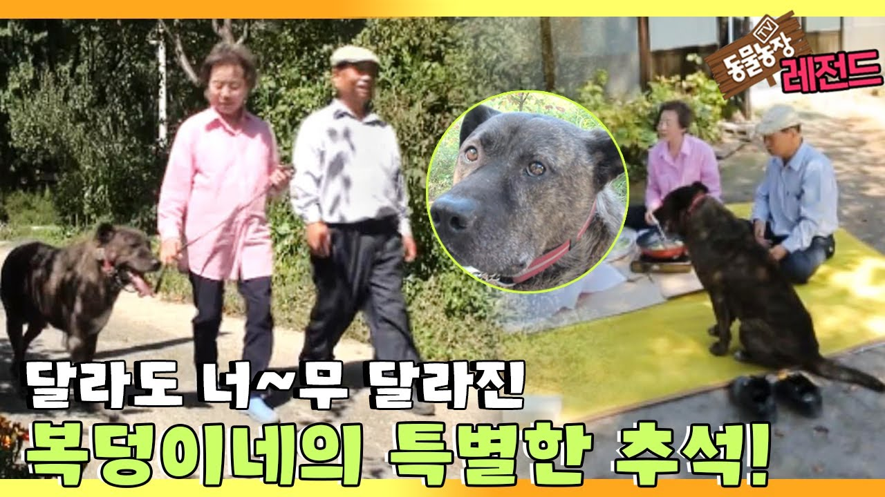 [TV 동물농장 레전드] '노부부와 복덩이의 너는 내 운명♥' 풀버전 다시보기 I TV동물농장 (Animal Farm)   SBS Story