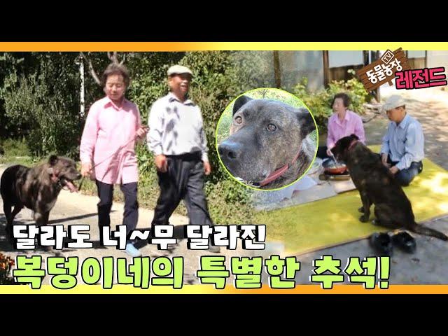 [TV 동물농장 레전드] '노부부와 복덩이의 너는 내 운명♥' 풀버전 다시보기 I TV동물농장 (Animal Farm) | SBS Story