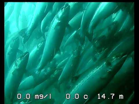 SeaSight 410 Underwater Camera (Colour) - Gael Force Marine Technology