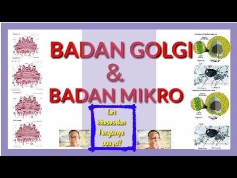 Badan Golgi Dan Badan Mikro Youtube