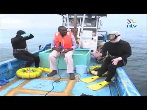 The Ama diving grannies hunt in the deep waters of Japan
