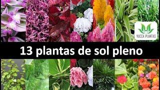13 Plantas de Sol Pleno: Dicas de Plantas Lindas e Fáceis de Cultivar