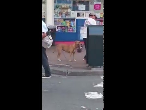 Amazing dog helps his friend with his job. Guayaquil Ecuador