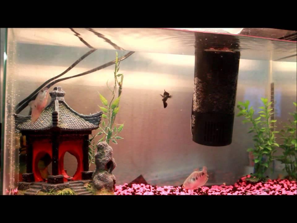Japanese Inspired Fish Tank Youtube