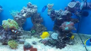 видео Способы оформления морского аквариума