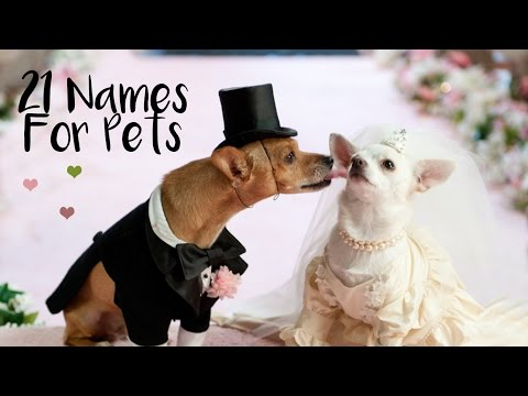 LOVE | Pet's Names Inspired By...