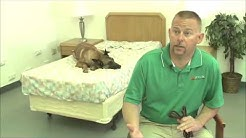 Dogs Trained to Find Bed Bugs in Prescott