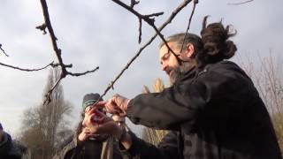 The Pod's guide on how to prune an apple tree