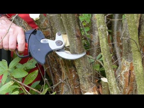 Electric Secateurs / Loppers