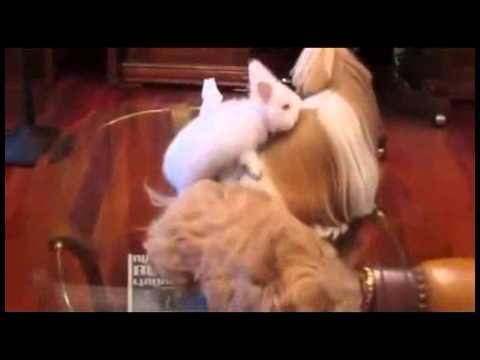 Кролик трахает...