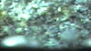 VIDEORAY - AQUACULTURE Investigating Kill of Atlantic Cod in Trinity Bay, Newfoundland