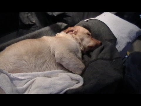 Dog Rescue! Dog treated in ambulance for hypothermia!