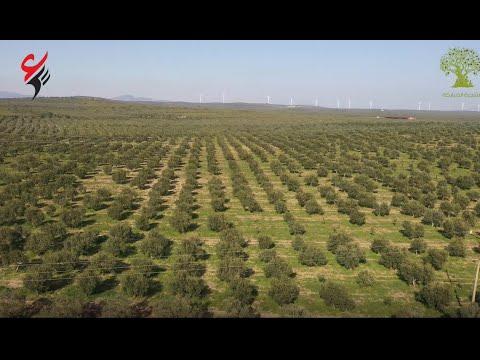 أين ما غرست فحصادك لليمن | تدشين المجموعة الأولى من مشروع الشجرة المباركة الوقفي | وقف أويس القرني