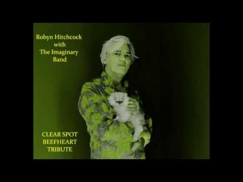 ~Robyn Hitchcock and the Imaginary Band ~ Clear Spot ~Beefheart Tribute