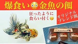 話題の金魚エサ たくさん食べて大きく艶やかに・・・餌やりが楽しくなる