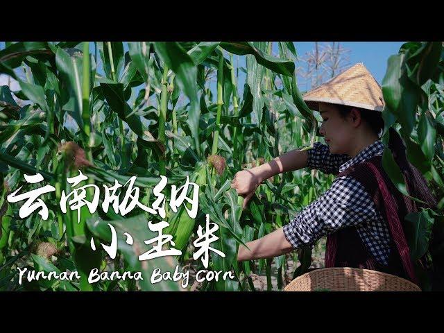 版纳小玉米——云南四季都能吃到的新鲜美味【滇西小哥】