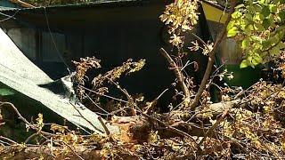 На территории детсада в Краснодаре упало дерево, погибла 2-летняя девочка