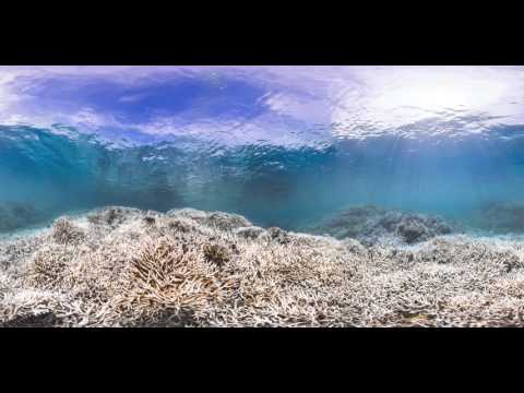 A coral reef before, during, and after a 'bleaching' event in 2014