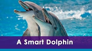 A Smart Dolphin | English Audio Story | Animated Fun Learning  Video for Kids