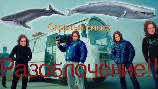Скрытый смысл Грибы-тает лёд, Синий кит виноват во всём!
