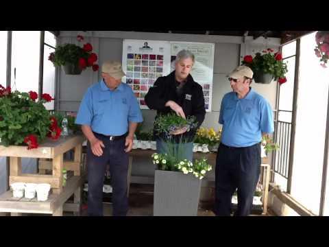 Proven Winner summer container garden