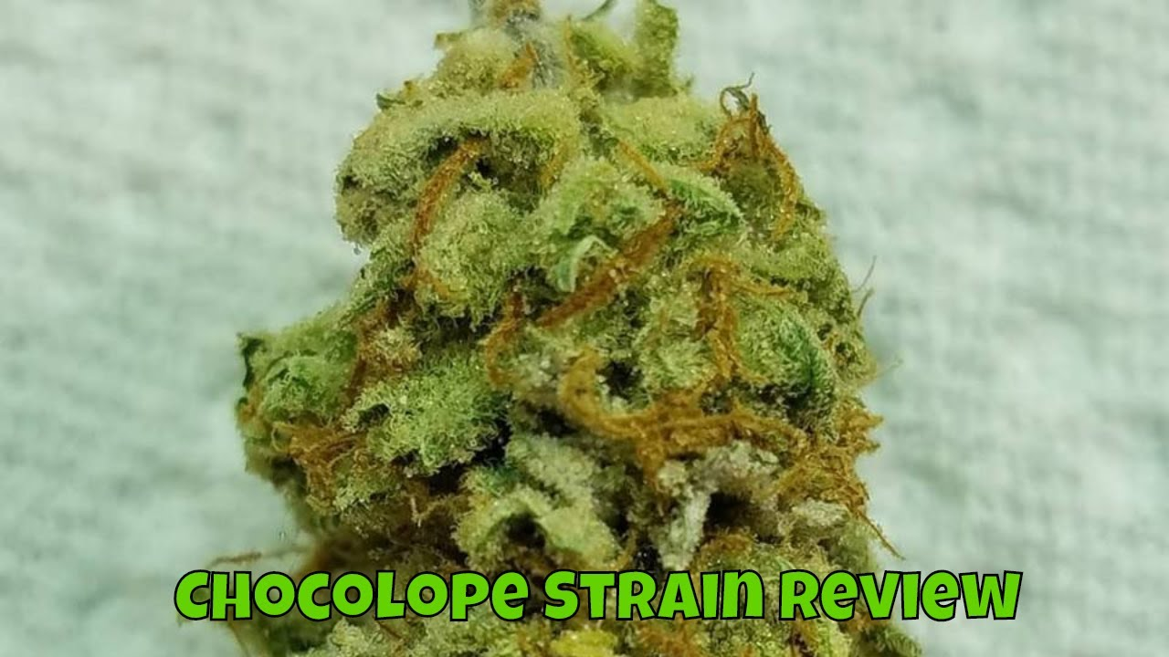 Weed Review Chocolope Strain Review