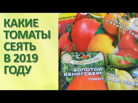 Обзор семян томатов 2019
