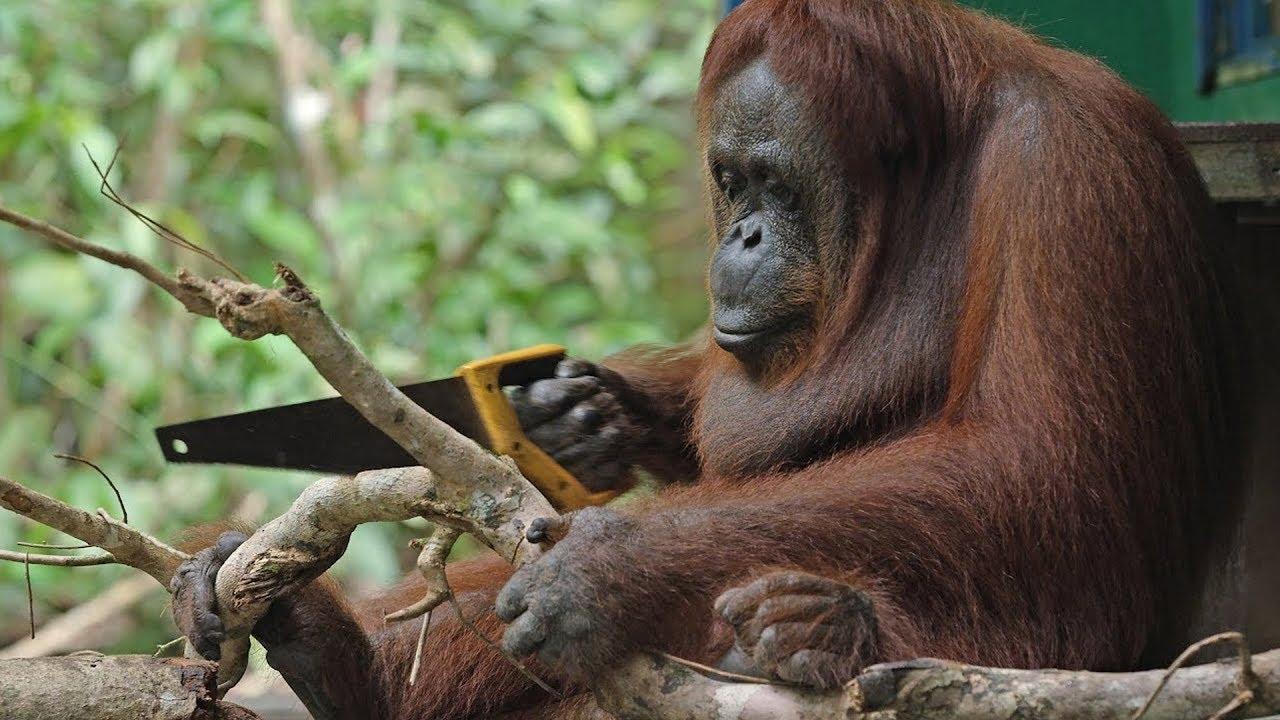 استخدام الحيوان للأدوات بـ 10 طرق عجيبة !!