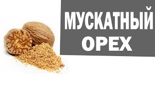 Мускатный орех. Мускатный орех- польза и противопоказания