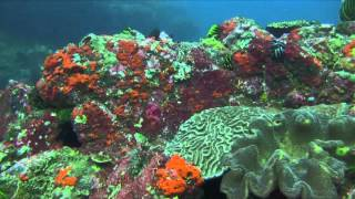 Bali Dive Safari Island Tracking Paul Ranky Copyright VideoClip18