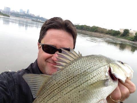 Street Fishing - Kansas City KS USA // White Bass