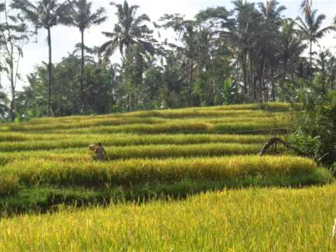 TJUB243 - Exotic Property for sale in Bali, rice fields view land for sale in Ubud Bali