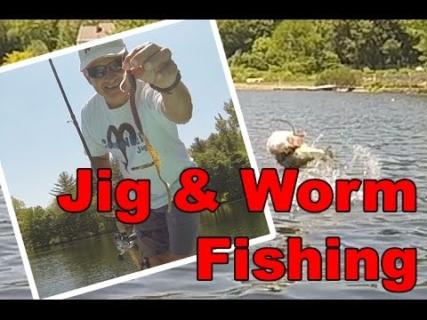joey diy king how to export live fish