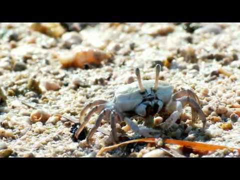 南海指環 東沙島的形成與蟹類生態