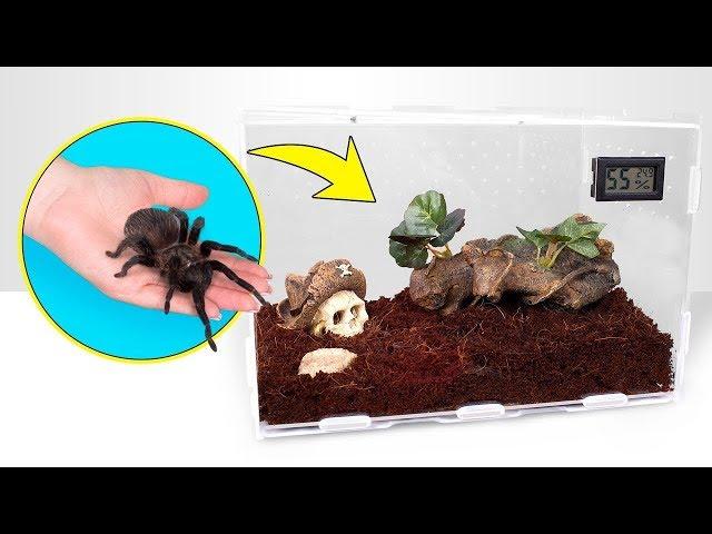 Cómo crecen las tarántulas | Una perfecta casa para tu mascota araña