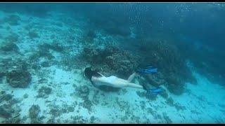 [프리다이빙] 세부 모알보알 다이빙 포인트: 거북이랑 …