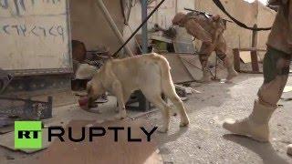 Служебные собаки помогают российским саперам разминировать Пальмиру