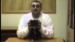 Правила воспитания кошек