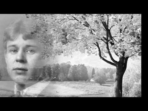 Сергей Есенин  Песнь о собаке