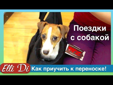Как приучить собаку к сумке переноске. Поездки с собакой с Elli Di.