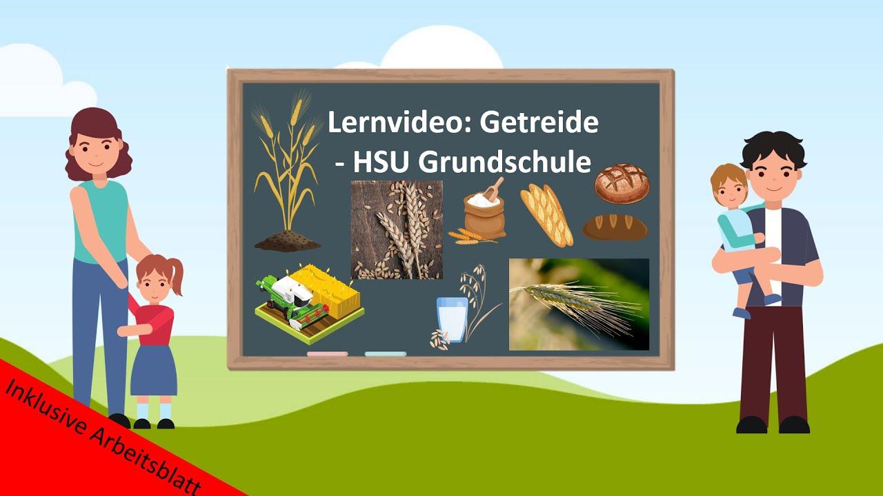Download Lernvideo: Getreide 🌾- HSU Grundschule
